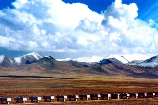 青藏高原   探秘世界第三极